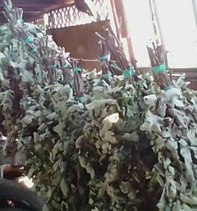 Продаються дубовые веники в баню