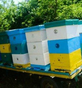 Пасека пчелы