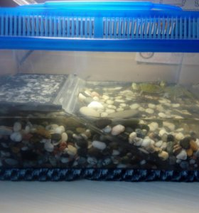 Красноухие черепахи с акватеррариумом.
