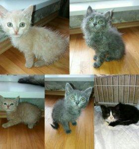 Котята от вислоухой кошки ищут дом!