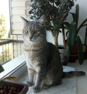 Кошка Мася БЕСПЛАТНО