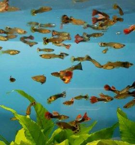 Рыбки(на Янгеля)