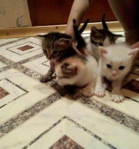 Котята подросли,уже сами кушают,и ходят в лоток.