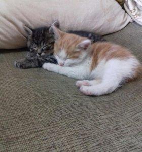 Котятки!