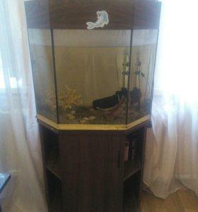 Аквариум с мебелью