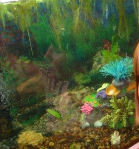 Искусственные водоросли в аквариум
