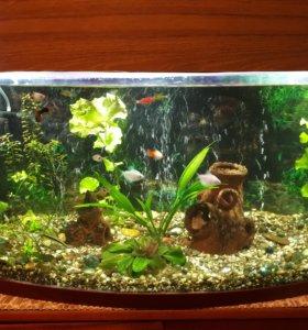 Продам аквариум 100 литров.