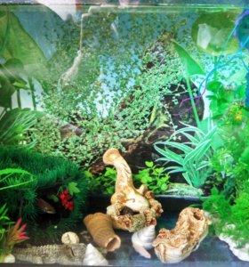 Аквариумы (можно с интерьером и рыбками)