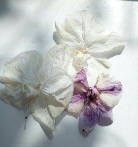 Сухие цветы орхидей