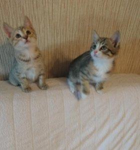 Кошки в добрые руки