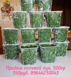 Продаю свежий полевой лук, 500гр.