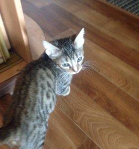 Котенок 2.5 месяца