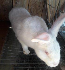 Кролики белый великан, чернобурые.