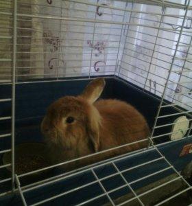 Кролик Стёпа!!!