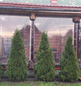 ПВХ изделия. Защитные шторы, для веранд и беседок.