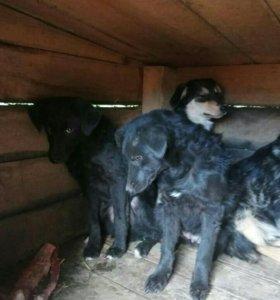 Щенки и взрослые собачки с доставкой в Суджу