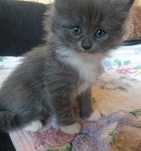 5 котят, возраст 1 месяц