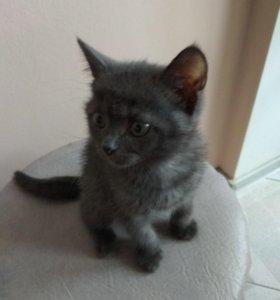 Отдам котенка, очень красивая девочка)))