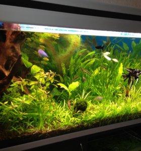 Продам аквариум AQUAEL
