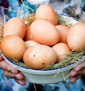 Продам яйцо куриное и перепелиные70рублей