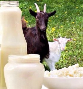 Молоко,творог с козьего молока