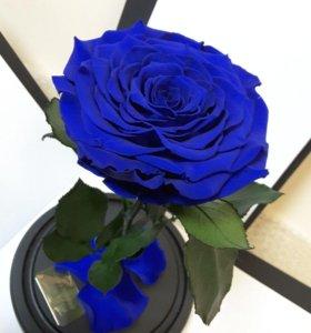 Живая роза В колбе -Лучший подарок для любимых