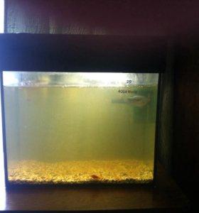 продам аквариум на 20 литров