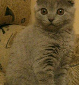Нужен Котик для вязки!!