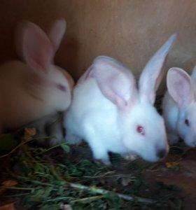 Крольчата молодняк