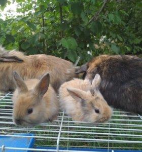 Декоративные кролик