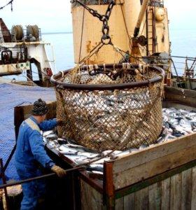 Рыбообработчица