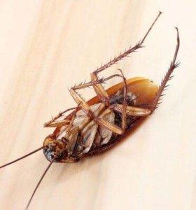 Уничтожение тараканов, клопов и т д...