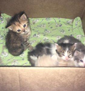 Милые пушистые котята