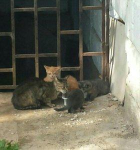 Помогите котяткам!!!