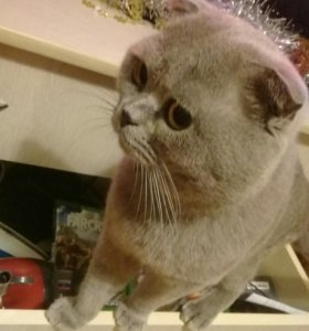 Вязка котиков