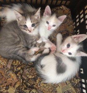 В добрые руки маленьких котят