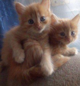 Кошечки 3 месяца