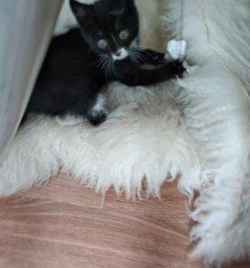 Кошечка в добрые и заботливые руки