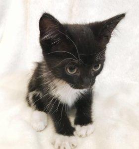Котёнок девочка 1,5 месяца
