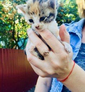 Отдам котят в хорошие руки!))