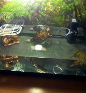 Черепахи с аквариумом и оборудованием
