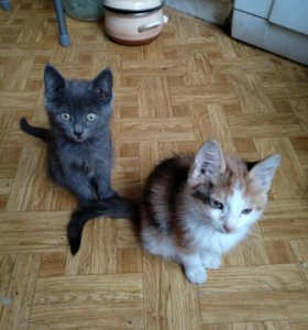 Котик и кошечка ищут хозяев.