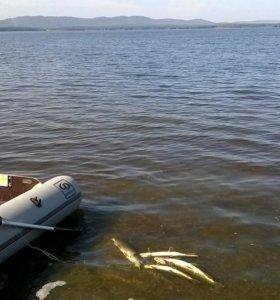 Пвх лодка под мотор килевая.