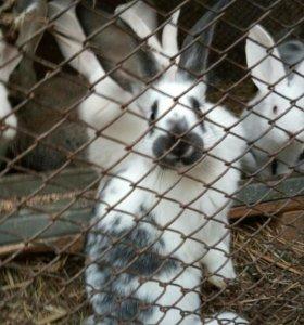 Кролики разной породы и разных возрастов