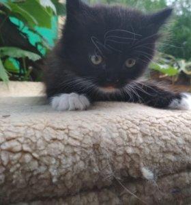 Котёнок) отдам в добрые руки.