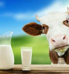 Продаю коровье молоко