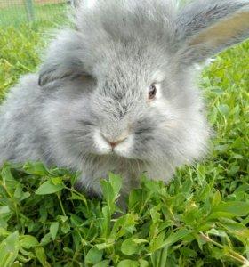 Кролики разной породы