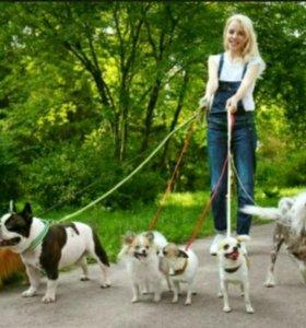 dogwalker выгуливание собак.