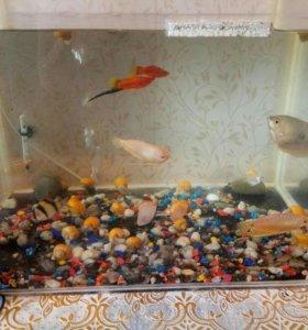Продам рыбок и улиток