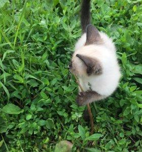 Отдам в добрые руки милого котёнка 😻